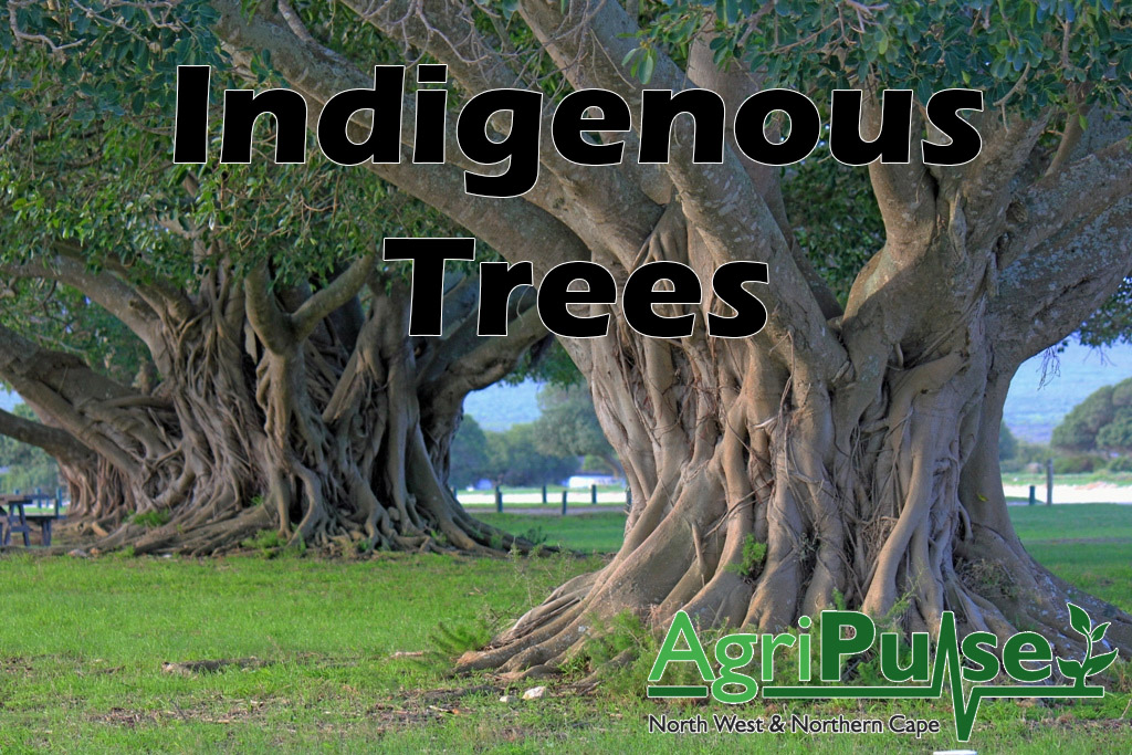 Indigeonous Trees